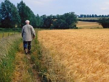 Аренда земельного участка сельскохозяйственного назначения — иллюстрация