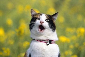 Нарушение правил содержания домашних животных — иллюстрация к новости